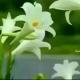 一朵气质花